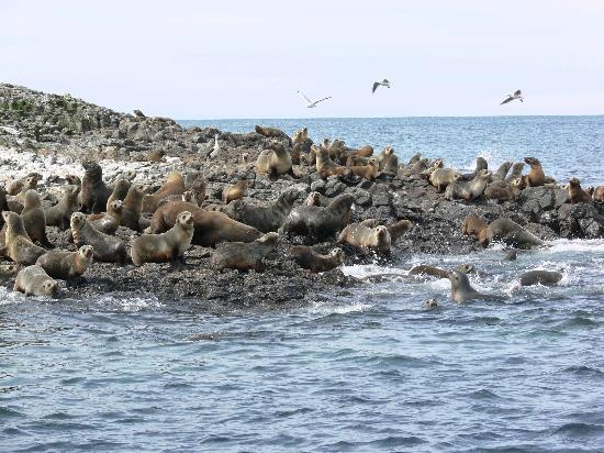 Abbey's Cottages: Seal tour
