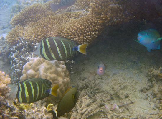 Jean-Michel Cousteau Resort: Typical scene snorkelling around