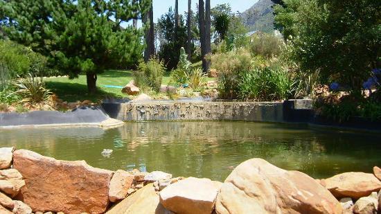 The Tarragon: koi pond
