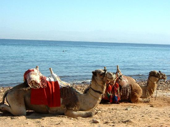 Rotes Meer und Sinai, Ägypten: Lunch Break