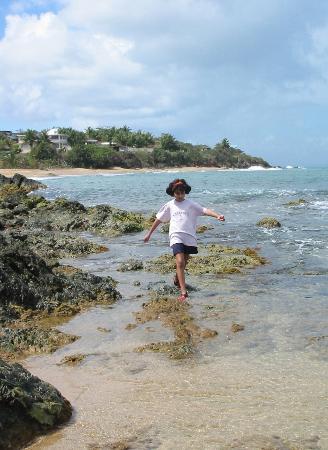 Isla de Vieques, Puerto Rico: Monte Santo area