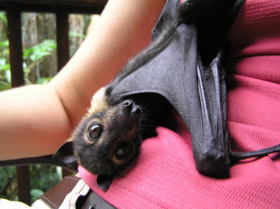 BatReach: Sam, an orphan full of personality.