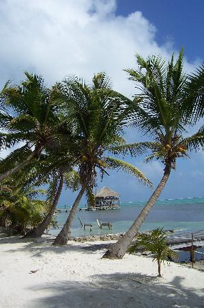 Ambergris Caye, Belize : One resort that cleaned up the beaches well
