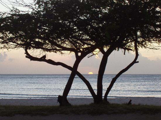 أروبا بيتش فيلاز: Amazing Sunsets