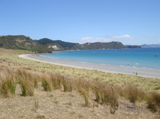 Coromandel, Nya Zeeland: White Beach, Great Mercury Island- fabulous scallop bed in this bay