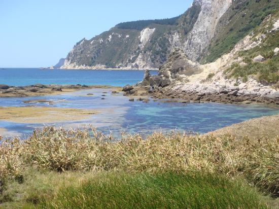 Coromandel, Nya Zeeland: Coralie Bay- great area for snorkelling and setting the cray pot