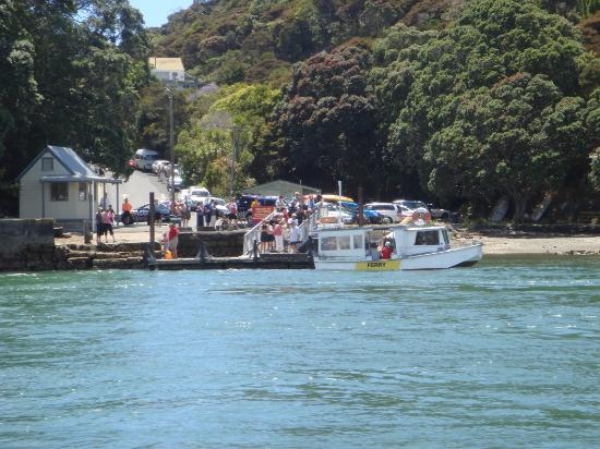 Whitianga Ferry- oldest wharf (and ferry by the looks of it) in Australasia (Jan4th queues)
