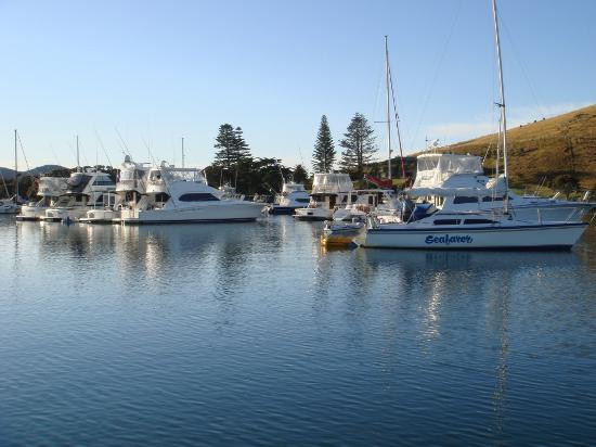 Mercury Bay: The morning after the night before- A brilliant New Years Day
