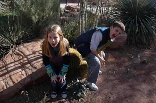Marjorie Barrick Museum of Art : Cactus Garden