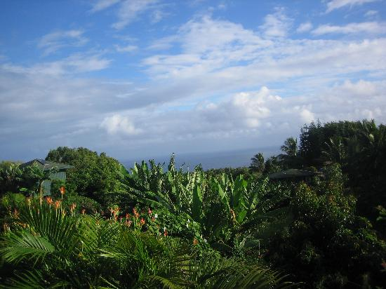 Maui Ocean Breezes Foto