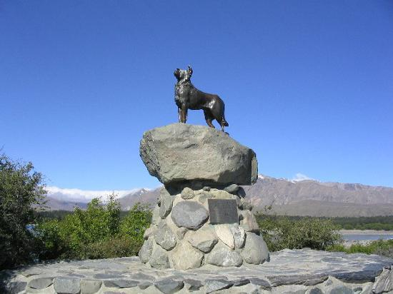 Lake Tekapo, Nya Zeeland: dog statue at Tekapo - just down from church