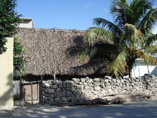 Posada Luna del Sur : Neighbor next door
