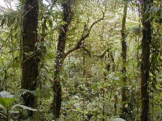 Nationalpark Monteverde, Costa Rica: Monteverde 2