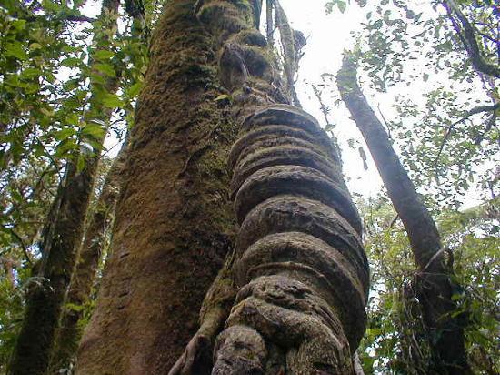 Nationalpark Monteverde, Costa Rica: Monteverde 3