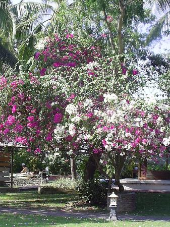 Dhyana Pura Beach Resort: Garden