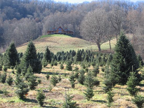 Nc Christmas Tree Farm.Boyd S Christmas Tree Farm In Maggie Valley Picture Of Maggie
