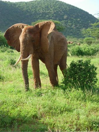 Samburu Serena Safari Lodge Photo