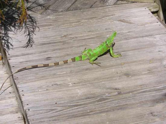 Bucuti & Tara Beach Resort Aruba: One of the bar regulars--always orders a Grasshopper
