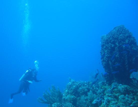 Long Caye Resort: Diving is world-class.