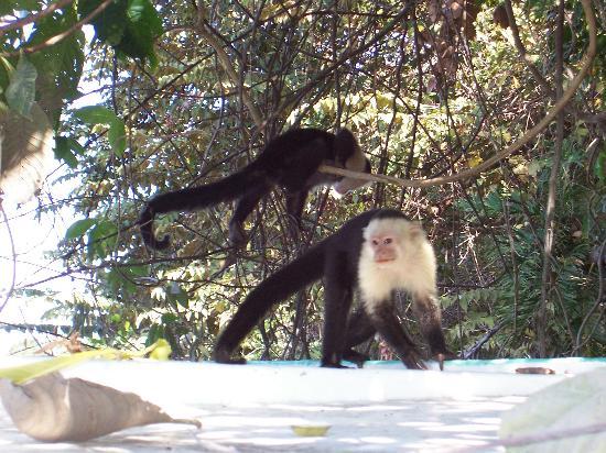 Allegro Papagayo: river cruise - monkeys hitchin a ride