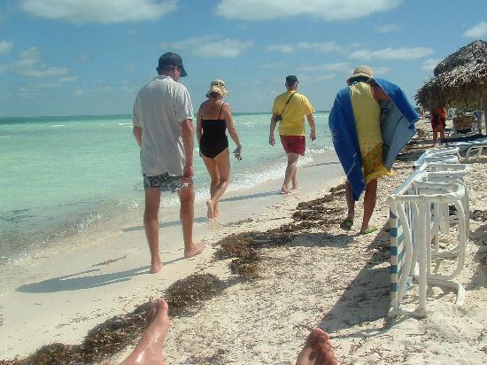 Melia Cayo Guillermo: plage et algue