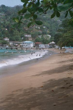 The beach at Charlotteville Tobago