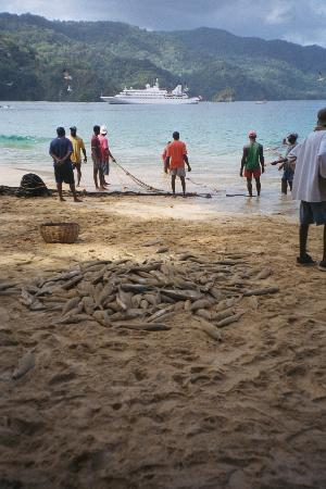Charlotteville : Today's catch.