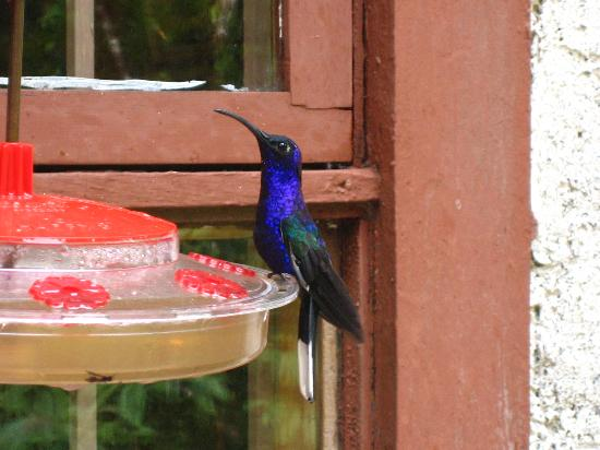 Hotel Trapp Family: humming bird outside cloud forest