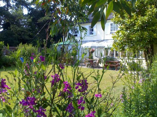 Verandah House: Garden