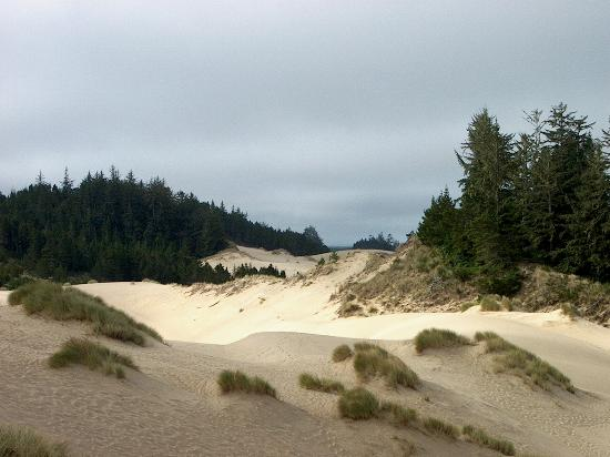 Oregon Dunes National Recreation Area: Dunes