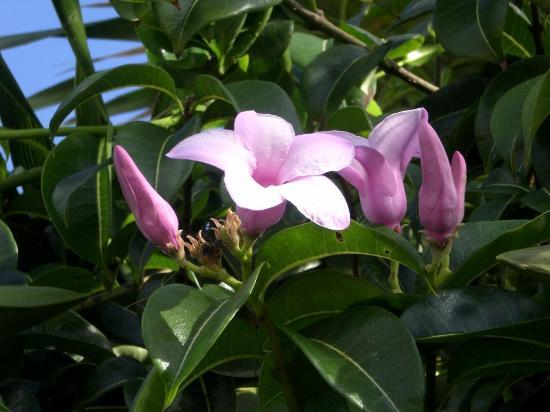 Posada Luna del Sur: Flowers near Tulum Ruins