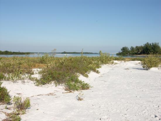 Fort De Soto Park: Strand