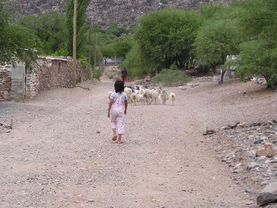 La Paya: Herding goats and sheep