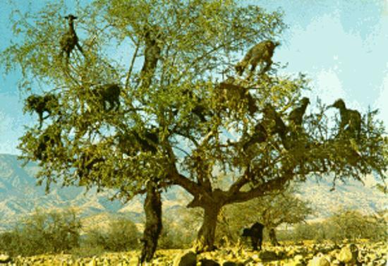 Zdjęcie Imlil
