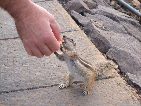 Elba Lucia Sport & Suite Hotel: feeding the chipmunks