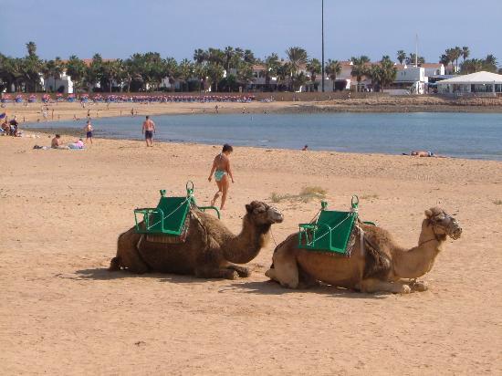 Costa de Antigua, Spain: beach at caleta de fuste
