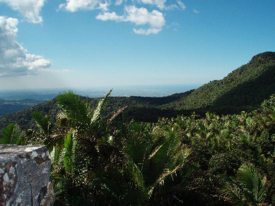 Национальный заповедник Эль-Юнк, Пуэрто-Рико: View from top of El Yunque
