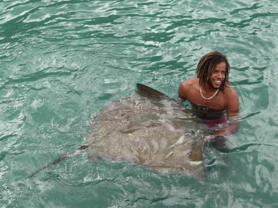 Hummingbird Hotel: a stingray makes friends with one of the Catamaran crew
