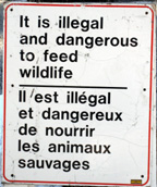 It is illegal and dangerous to feed wildlife