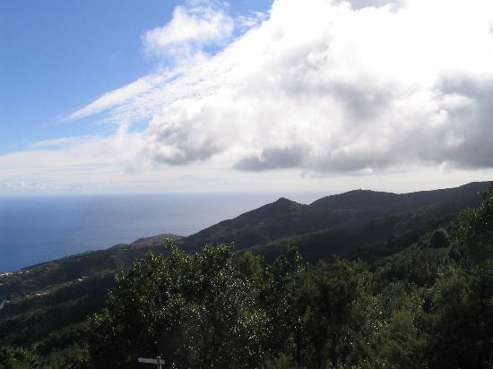 La Palma, Spain: The view just outside the forest