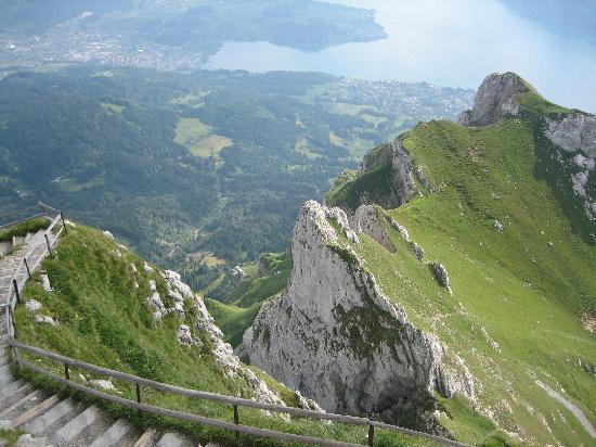 Lucerne Image