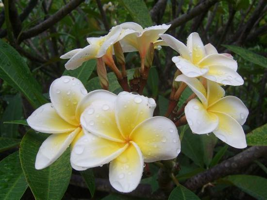 Beautiful flower voltagebd Image collections