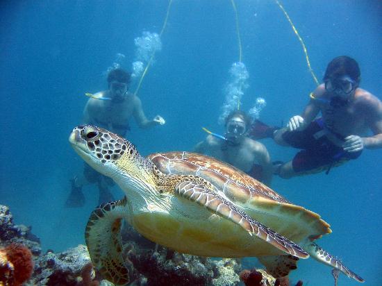 SNUBA Turks and Caicos: Turtle
