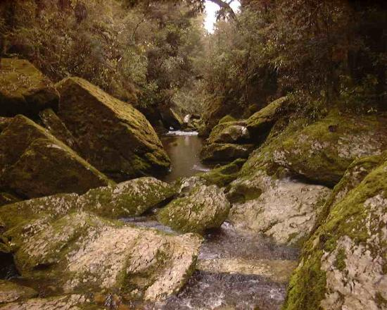 Pulau Selatan, Selandia Baru: Cave Creek, West Coast- great walking track