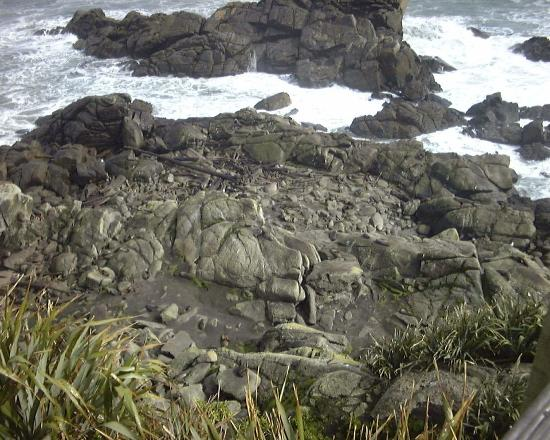 Isla Sur, Nueva Zelanda: Seal Colony, Cape Foulwind- look closely there are dozens in amongst the rocks