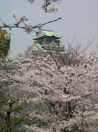 Osaka Castle through the cherry blossom