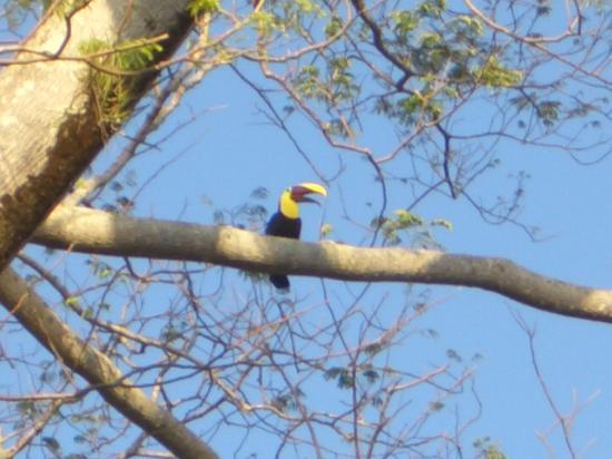 Costa Paraiso: Toucans