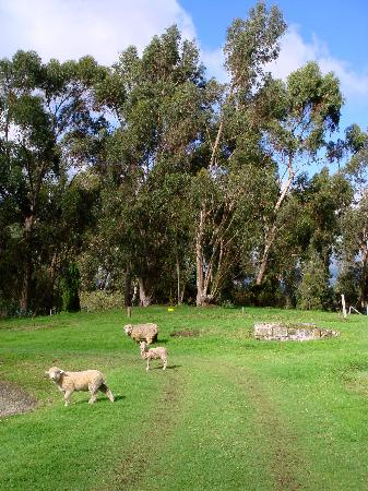 Hacienda San Agustin De Callo: Organic lawnmowers