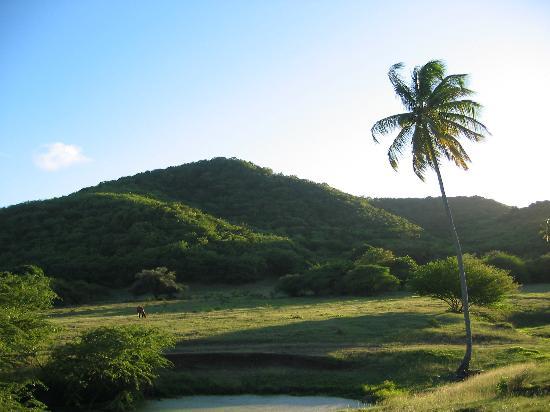 Cocobay Resort: On walk with Medicine Man