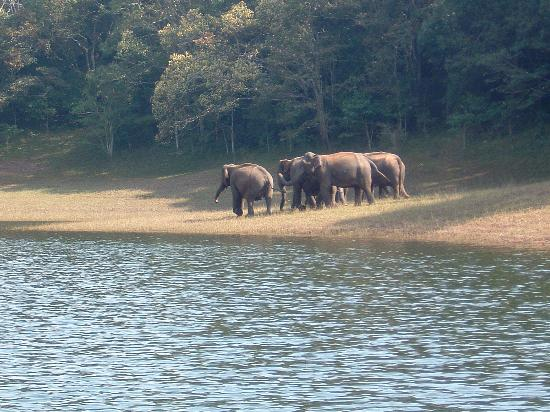 Spice Village: Wild elephants
